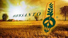 Monsanto continues to be the target of protests and demonstrations as they seek to standardize agriculture markets around the world. Companies like Monsanto create their own patented seeds that have been genetically modified to withstand biocides used to kill pests and weeds. Not only does …