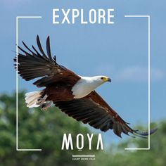 Some of Africa's most iconic wildlife species can be found on Hoedspruit Wildlife Estate, the home of Moya… Bald Eagle, Safari, Wildlife, Villa, Africa, Explore, Animals, Animales, Animaux