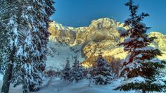 Winter Mountains Austria Snow Trees Spruce Alps Nature  #Alps #Austria #Mountains #Nature #Snow #Spruce #Trees #Winter