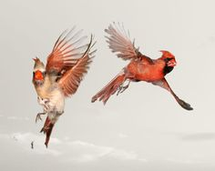 Paul-Nelson-wild-birds-flying photography
