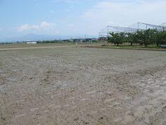 【御田植】平成24年5月26日、伝統的稲作行事『御田植』(主催・巴会)にて。一反五畝(15アール)をすべて手植えで行いました。