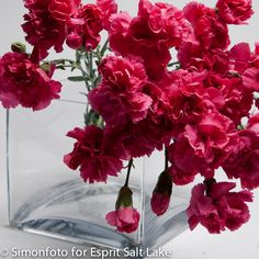 """Katerina"" hot pink mini carnation"