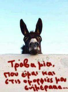 Funny As Hell, The Funny, Happy Animals, Funny Animals, Life In Greek, Funny Greek Quotes, Funny Times, Photo Quotes, True Words