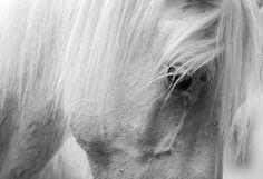 La Cavalière masquée » Photography
