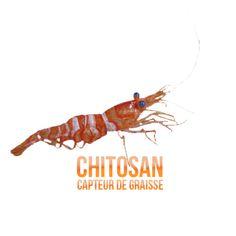 ✭ Chitosan - Complément alimentaire - 100% naturel ✭ Chitosan capteur de graisse Le chitosan est connu au Japon pour sa considérable capacité de développer et déployer un gel protecteur dans l'estomac. Le chitosan fibre naturelle obtenue à partir de la chitine le principal constituant de la carapace de crustacés. ✭