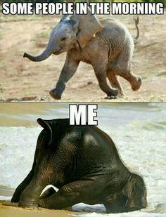 Lustige Tiermemes - Funny animal memes make me laugh - Funny Animal Jokes, Animal Humour, Stupid Funny Memes, Cute Funny Animals, Funny Relatable Memes, Funny Animal Pictures, Funny Photos, Tired Funny, Cute Animal Quotes