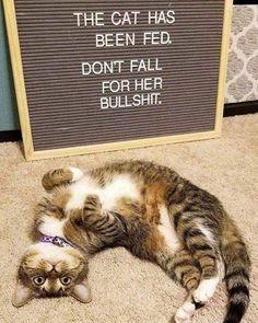 New meme compilation (cat memes,dog memes,pets memes,animal memes) Funny Cats, Funny Animals, Cute Animals, Cute Kittens, Cats And Kittens, Siamese Cats, Kitty Cats, Crazy Cat Lady, Crazy Cats