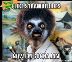 Lemur meme