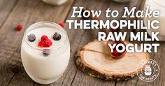 How To Make Thermophilic Raw Milk Yogurt
