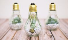 How to Make Homemade Light Bulb Jar : Reusing And Recycling Is Fun & Useful. Today I Will Talk About Light Bulb Jar And The Uses Of It. Changing Burned Light Bulbs To Useful House Items Is Fun & Useful. Light Bulb Jar, Light Bulb Terrarium, Diy Terrarium Kit, Fun Crafts, Diy And Crafts, Arts And Crafts, Super Cola, Suculentas Diy, Diys