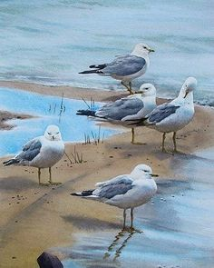 VK is the largest European social network with more than 100 million active users. Acrylic Artwork, Bird Artwork, Cool Artwork, Watercolor Bird, Watercolor Artwork, Bird Drawings, Animal Drawings, Nautical Drawing, Seascape Art