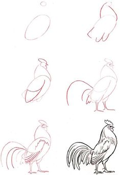 how to draw a rooster: