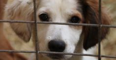 Compelling reasons to adopt a dog during  Adopt a Shelter Dog month.