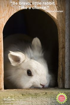 """""""Be brave, little rabbit. Take a chance."""" – Cherise Sinclair What will you take a chance on this spring? Hallmark Channel, Spring Fever, Romantic Movies, Original Movie, Brave, Rabbit, Pets, Bucket, Inspirational Quotes"""