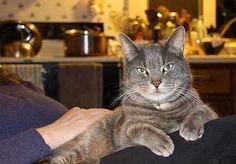 Картинки по запросу Mr. cat