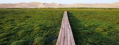 Khongoryn Els, Mongolia