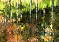 Beaver Pond Reflections - 1, Gatineau Park, Quebec. I'm in the annual West End Studio Tour in Ottawa and one year I had a 24 x 36 canvas of this image hung over my mantle and it looked fantastic. I sold 2 at 24 x 36 and one even larger by special order. This is one of my personal favourites.   Fine Art Photography http://rob-huntley.artistwebsites.com © Rob Huntley