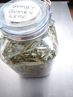 Gumby Gumby Leaf Herb Wall, Organic Skin Care, How To Know, Natural Health, Remedies, Essentials, Herbs, Leaves, Plants
