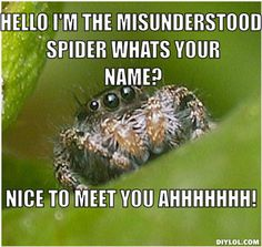 DIYLOL - hello i'm the misunderstood spider whats your name? nice ...