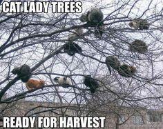 Cat lady tree. Oh my.