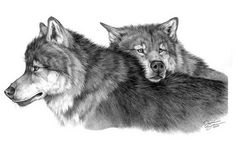A wolf is usually considered having the character of intelligence and loyalty. Here we have collected cool wolf drawings for your inspiration. Cool Wolf Drawings, Pencil Drawings Of Animals, Music Drawings, Drawing Animals, Art Drawings, Wolf Illustration, Wolf Tattoos, 3d Tattoos, Tatoos