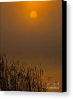 Golden Morning Canvas Print by Scott Hervieux.  All canvas prints are professionally printed, assembled, and shipped within 3 - 4 business days and delivered ready-to-hang on your wall. Choose from multiple print sizes, border colors, and canvas materials.