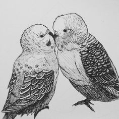 Love Birds practice