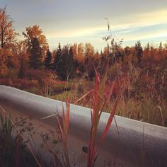 #fall #autumn #photooftheday #photogram #photographie #photographers #leaves #nature #landscapes  #forest #yeg #exploreedmonton #explorenature #yeggers #fallforalberta #fallvibes #weareyeg by dianadd85