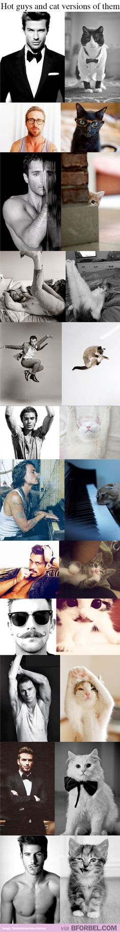 Hot guys and cat versions of them!