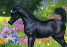 Black foal horse spring flowers butterfly limited edition aceo print art