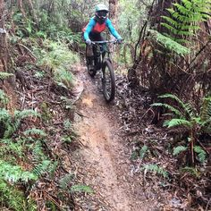 In action on the #mtb trails in #apollobay my #6fattie #rhyme totally loved the #mud and technicality of the #trails! Was such a great #adventure and so much #fun!!!! One of the best #rides I've done even when I was sliding coated in mud and wet through! (This was after I took my jacket off so had a clean top for about 5mins) #weekendsareforadventures #queenofthemtn #cyclelikeagirl #travelplaylife #radgirlslife #thisgirlcan by redrocketeer http://ift.tt/1LQi8GE