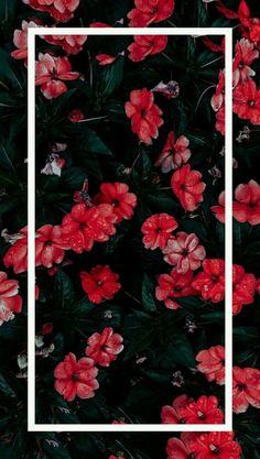 21 Sunset Makeup Looks Tropical sunset flowers Tropical sunset flowers wallpaperpinteres… Tumblr Wallpaper, Cute Wallpaper Backgrounds, Pretty Wallpapers, Flower Backgrounds, Aesthetic Iphone Wallpaper, Flower Wallpaper, Nature Wallpaper, Cool Wallpaper, Mobile Wallpaper