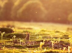 Nature Photography by Alex Saberi   Photographist - Photography Blog #inspiration #officetrends #bunny #rabbit #ambient light #warm