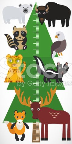 tree spruce, polar bear bison raccoon fox. Children height meter royalty-free stock vector art