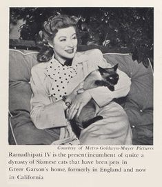 "Greer Garson with Ramadhipati IV.  Interesting that so many movie stars had Siamese cats in their photos.  Was it the ""cat du jour""? Of 8 star/cat photos clustered near Greer Garson on the daily Pinterest, all have Siamese cats.  Interesting observation."