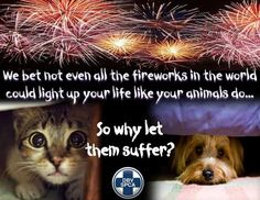 Cats and dogs – Medical safety fireworks 1 Medication For Dogs, Trophy Hunting, Fur Trade, Light Of Life, Like Animals, Excercise, Fireworks, Your Pet, Dog Cat