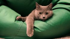 Are you considering getting a beanbag chair for your cat after watching the video? It might be a great addition to your kitty's own personal cat corner in your home. Here are a few tips for creating the perfect comfortable and fun cat corner for your feline friend!