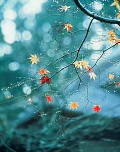 Fall Photography: How To Capture The Most Beautiful Images Wallpaper Nature Flowers, Beautiful Flowers Wallpapers, Cute Wallpaper Backgrounds, Flower Wallpaper, Flower Backgrounds, Cute Wallpapers, Iphone Wallpaper, Most Beautiful Images, Autumn Forest