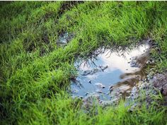 Solve Your Lawn Drainage Problems with These Systems Sump Pump Drainage, Drainage Ditch, Yard Drainage, French Drain Installation, Sod Installation, Surface Drainage, French Drain System, Leaking Pipe, Drainage Solutions