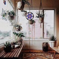 Insides: Serena Mitnik-Miller. #houseplants #hangingplants