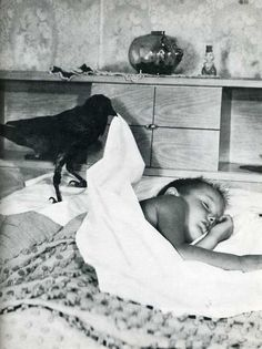 Not all beloved pets are of the typical variety.  Vintage photo of sleeping boy with his pet crow.