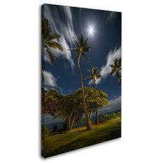 """Trademark Art """"Moonlit Palm Trees"""" by Pierre Leclerc Photographic Print on Wrapped Canvas Size:"""