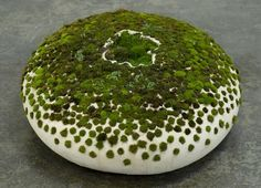 Ceramic and Moss Art Inspired by Japanese Rock Gardens Moss on Ceramic 2009 by Mineo MizunoMoss on Ceramic 2009 by Mineo Mizuno Moss Garden, Garden Art, Garden Water, Ceramic Pottery, Ceramic Art, Japanese Rock Garden, Growing Moss, Moss Art, Paludarium