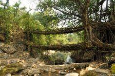 Deep in the dense tropical forest of Maghalaya are astonishing half man-made, half natural wonders: ... - michalknitl/123RF