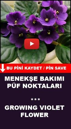 House Plants, Planting Flowers, Herbs, Garden, Tips And Tricks, Gardening, Shade Flowers, Audrey Hepburn Style, Best Flowers
