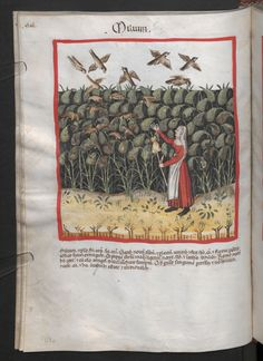 Folio 47v (page 98). Tacuinum sanitatis, Codex Vindobonensis, series nova 2644. Northern Italy, probably Verona, 1380-1399.