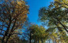 Landshuter Herbst by Martin Kochloefl on 500px
