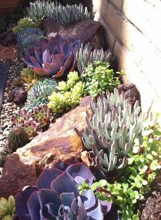 LOVE something like this along the perimeter of our backyard!!!! Color and height of succulents and different rocks is a must!