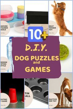 Best DIY Dog Puzzle Toys and Games to Make at Home. Treat your dog with these easy to make dog brain games and puzzles. dog enrichment Best DIY Dog Puzzle Toys and Games to Make at Home Games For Puppies, Brain Games For Dogs, Dog Games, Toy Puppies, Dog Treat Puzzles, Dog Treat Toys, Dog Puzzles, Homemade Dog Toys, Diy Dog Toys