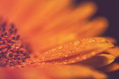 https://flic.kr/p/rX4Gdo | Flower in Petals